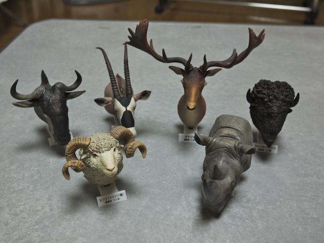 大哺乳類展-陸のなかまたち - kahaku.go.jp